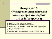 Презентация lektsia MPA Kataev 2013 god