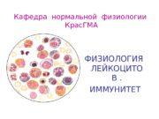 Кафедра нормальной физиологии  Крас. ГМА ФИЗИОЛОГИЯ ЛЕЙКОЦИТО
