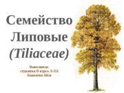 Семейство Липовые (Tiliaceae) Выполнила: студентка II курса Л-151