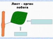Презентация list pobeg