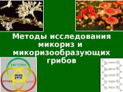 Презентация methodmycor-2012-new