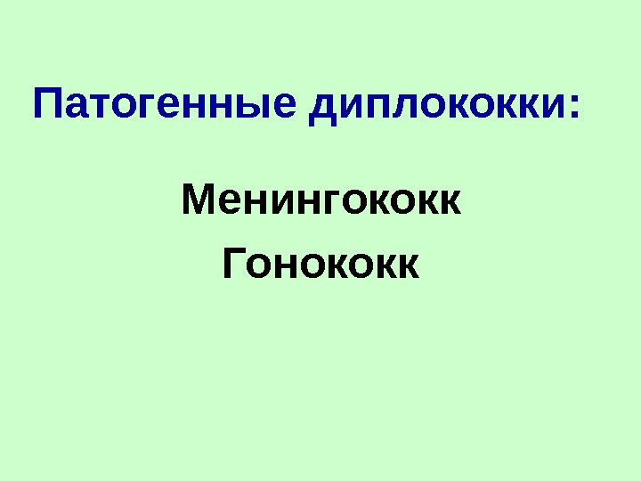 Менингококк
