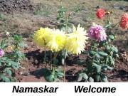 Namaskar Welcome  Body Mind. Consciousness Soul, Atman