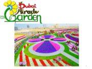 Tatyana Belkova. Dubai Miracle Garden 1  Dubai