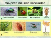 Таракановые  Прямокрылые  Уховертки  Поденки