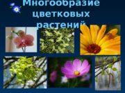 Многообразие цветковых растений 010203 0 C 0 C