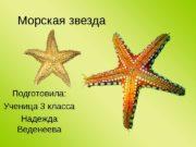 Морская звезда Подготовила: Ученица 3 класса Надежда Веденеева