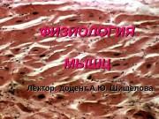 ФИЗИОЛОГИЯ МЫШЦ Лектор: доцент А. Ю. Шишелова