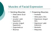 Muscles of Facial Expression  Smiling Muscles