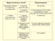 Виды мышечных тканей Происхождение I.  Поперечнополосатые (исчерченные