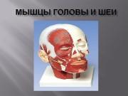 Мышцы головы делятся на  мимические и жевательные.