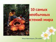 10 самых необычных растений мира Илья Кислицын, 2