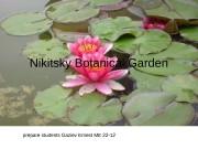prepare students Gaziev Ernest. Nikitsky Botanical Garden prepare
