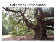 Oak tree as British symbol  The history