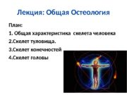 Лекция: Общая Остеология План: 1. Общая характеристика скелета