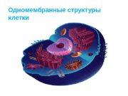 Одномембранные структуры клетки  Органеллы  — постоянные