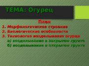 ТЕМА: Огурец План 1. Морфологическое строение 2. Биологические