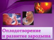 МУЖСКАЯ ГАМЕТА сперматозоид ( n)ЖЕНСКАЯ ГАМЕТА яйцеклетка (n)