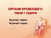 ОРГАНИ КРОВООБІГУ: серце і судини  Будова серця