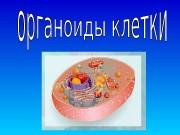 Презентация organoidy kletki rid v.n.
