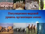 Презентация орыс тили
