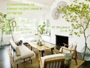 Озеленення та кімнатні рослини в інтер'єрі BY Міщенко