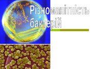 Паразитичні бактерії  (паразити)  Живляться речовинами живих