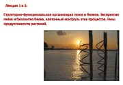 Лекции 1 и 2: CC труктурно-функциональная организация генов