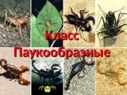 Класс Паукообразные  Класс Паукообразные Отряд Пауки Отряд
