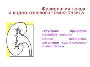 Основные вопросы:  Регуляция процессов мочеобра- зования
