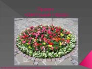 Проект  «Цветущий город» Автор презентации Лаури Владислав