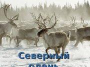 Северный олень  Мех оленя Подвес  Отпечаток