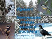 Проект  Зимующие птицы нашего поселка Выполнен учениками