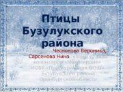 Птицы Бузулукского района Авторы :  Чеснокова Вероника,