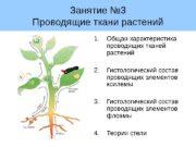 Занятие № 3 Проводящие ткани растений 1. Общая