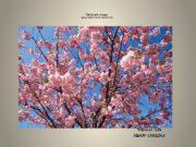 Цветущая сакура к уроку изобразительного искусства 4 класс