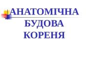 АНАТОМІЧНА БУДОВА КОРЕНЯ  ФУНКЦІЇ КОРЕНЯ:  —