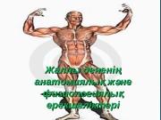 Жалпы денені ң анатомиялы ж не қ әанатомиялы