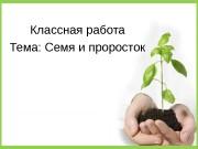Презентация семя и проросток
