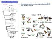 Систематика современных птиц – класс Aves (11, 8