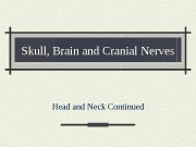 Skull, Brain and Cranial Nerves Head and Neck