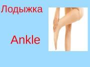 Ankle. Лодыжка  Calf. Икра (ноги)  C
