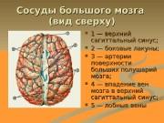 Презентация Сосуды большого мозга packed