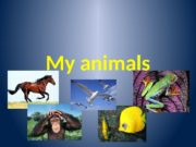 My animals  Bird [b : d]ᴈ Sing