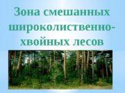 Зона смешанных широколиственно- хвойных лесов   расположена