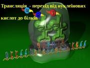 Трансляція — перехід від нуклеїнових кислот до білків