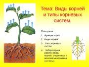 Тема: Виды корней и типы корневых систем. План