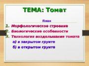 ТЕМА: Томат План 1. 1. Морфологическое строение 2.