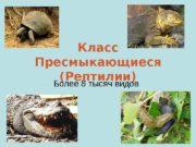 Класс Пресмыкающиеся (Рептилии) Более 8 тысяч видов