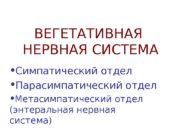 ВЕГЕТАТИВНАЯ  НЕРВНАЯ СИСТЕМА  Симпатический отдел